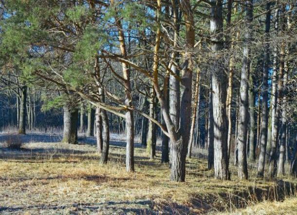 В лесах Волгоградской области потравят всех вредителей