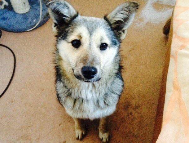 Жительница Германии выбрала себе собаку в приюте «Дино» под Волгоградом