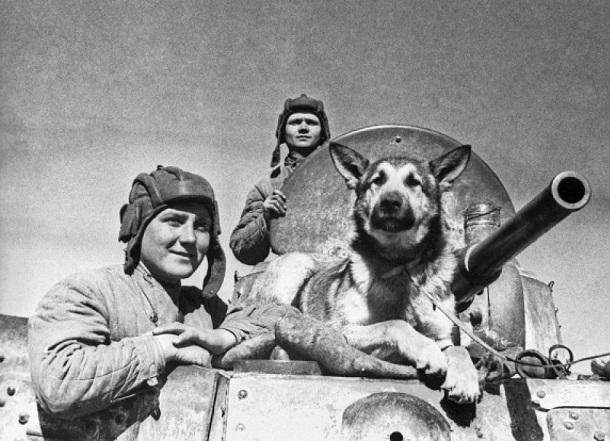 Служебные дворняжки шли под танки в боях за Сталинград