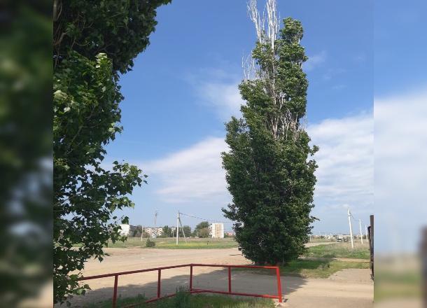 Сухие ветки деревьев скоро начнут убивать жителей Волжского