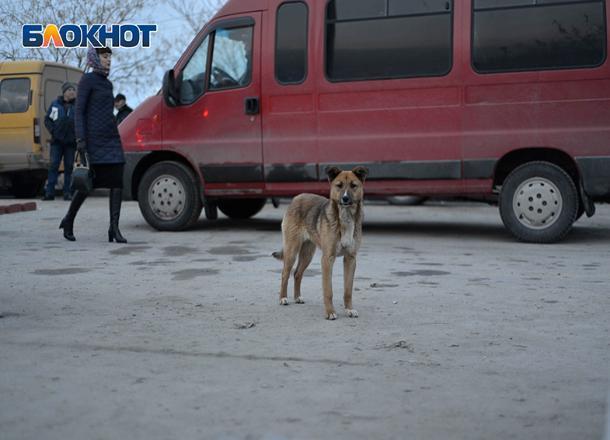 Арестованы трое бастовавших в центре Волгограда маршрутчиков