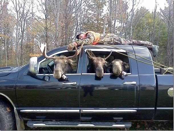«Пьяных оленей» на старой иномарке разыскивают в Волгограде
