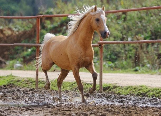 Лошади насмерть затоптали своего хозяина в поле под Волгоградом