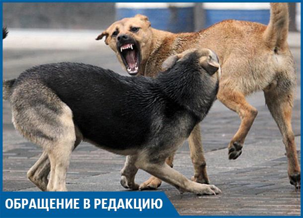 Пенсионерка серьезно пострадала после атаки собак на севере Волгограда