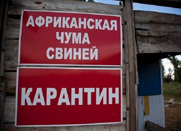 Африканскую чуму свиней выявили воВладимирской области
