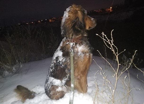 Волгоград замело снегом: горожане публикуют фото заснеженного города