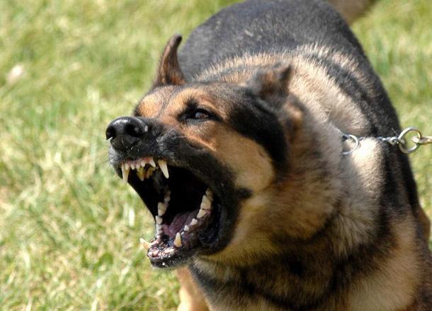 Сторожевые псы разорвали мужчину в Краснослободске