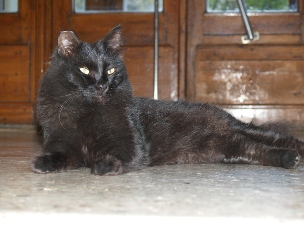 Мечта о космосе привела бездомного кота Пушеля в Волгоградский планетарий