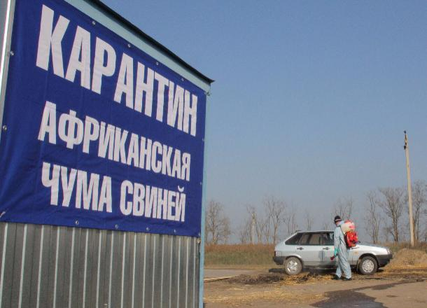 Под Волгоградом выявлен очередной очаг африканской чумы свиней