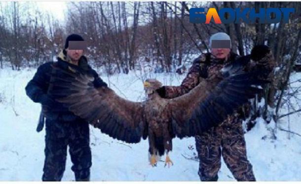 Служебная проверка будет проведена в отношении полицейского, убившего краснокнижного орлана