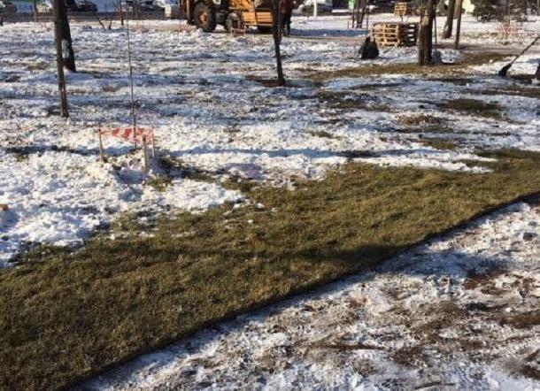 В мороз и снег коммунальщики Волгограда кладут газон