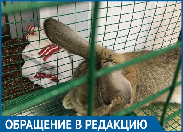 Животные сидят без воды, - крик души посетительницы волгоградского контактного зоопарка