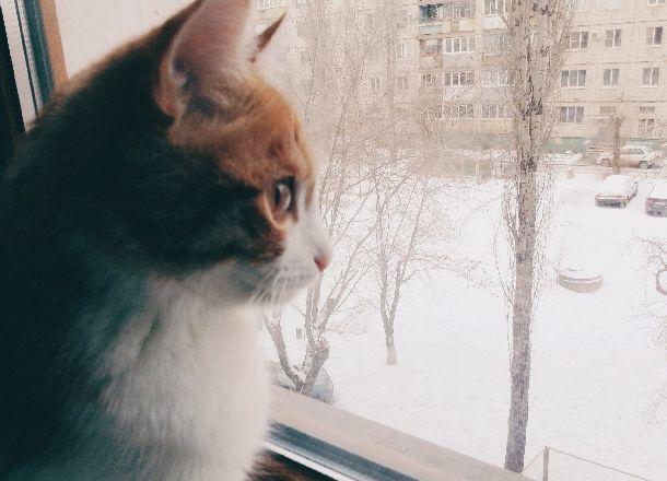 Синоптики рассказали, когда волгоградцам ждать снега
