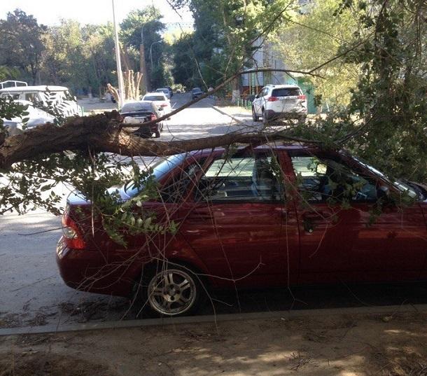 13 месяцев волгоградец выясняет, кто должен отвечать за упавшее на машину дерево