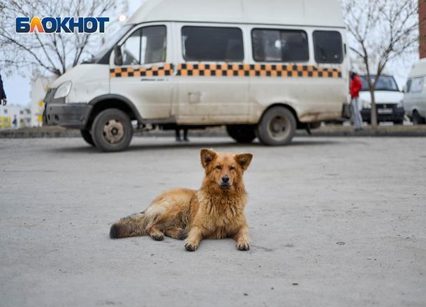 Иномарка премиум-класса догнала маршрутку в Волгограде: есть пострадавший