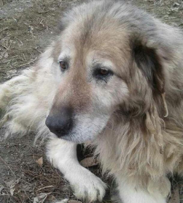 Жительница Волгограда бросила свою собаку умирать от голода и жажды за металлическим забором