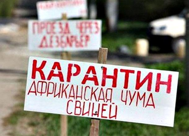 АЧС распространилась еще на два населенных пункта Волгоградской области