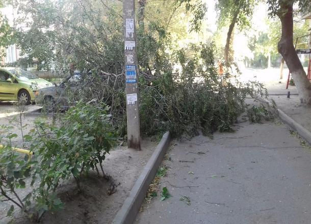 Сильный ветер обрушил дерево на авто в Волгограде
