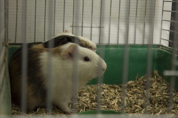 Бешенство распространяется среди домашних животных в Волгограде