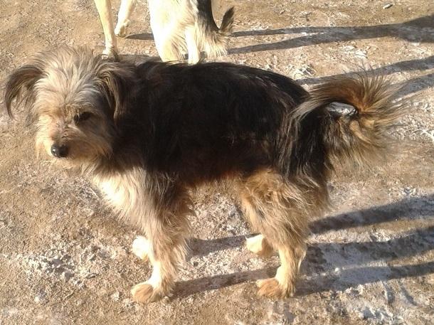 Сотрудники Госпитомника убили четверых наших собак на Семи ветрах, - шокированные волгоградцы