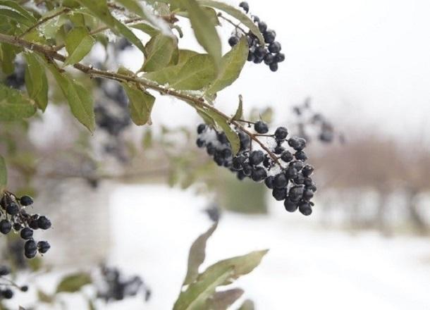 В Волгоградскую область пришли морозы до -17 ºС и сильный ветер