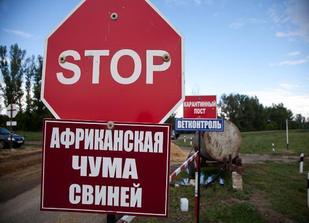 Под Волгоградом зарегистрирована еще одна вспышка африканской чумы свиней