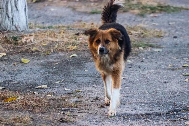 Большая часть жителей Волгограда боится собак