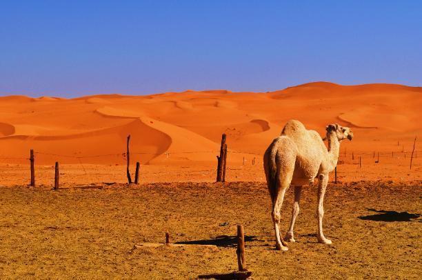 В пустыне Сахара и в Волгограде одинаково жарко сегодня