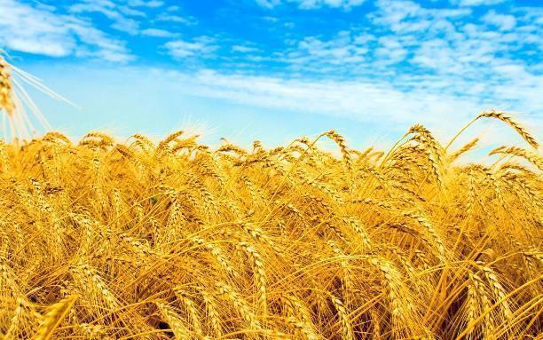 Волгоградской области предсказывают неурожай