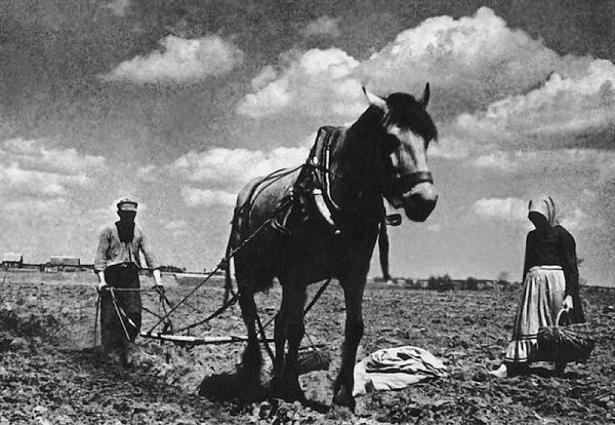 Календарь: 14 августа 1959 г – сформирована Волгоградская область в ее нынешнем виде