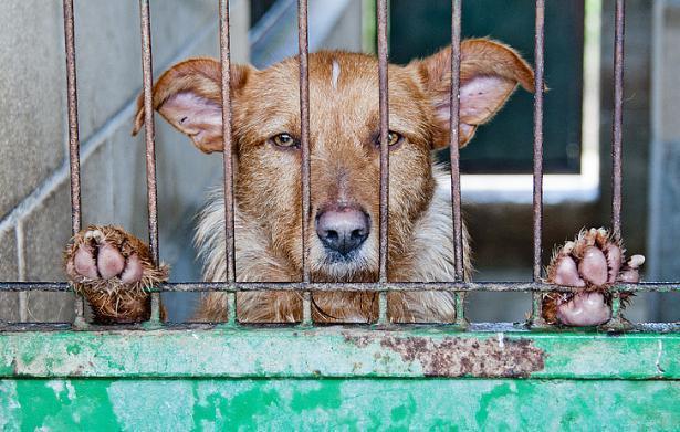 Волгоградские чиновники готовы платить за убийство собак по 2766 рублей с копейками