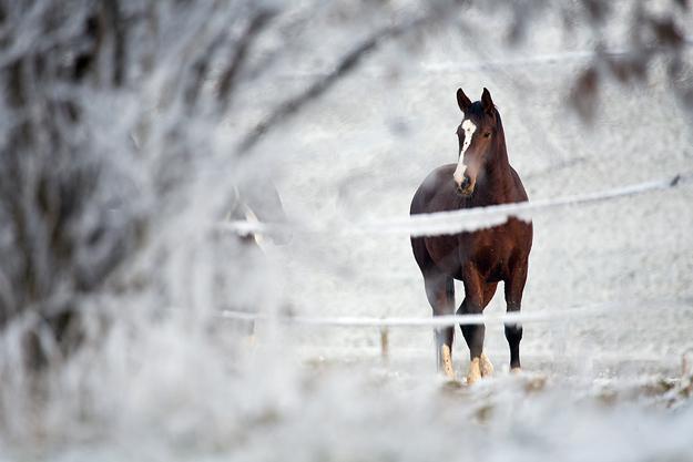 Из-за лошади в больницу попали трое мужчин из Волгоградской области