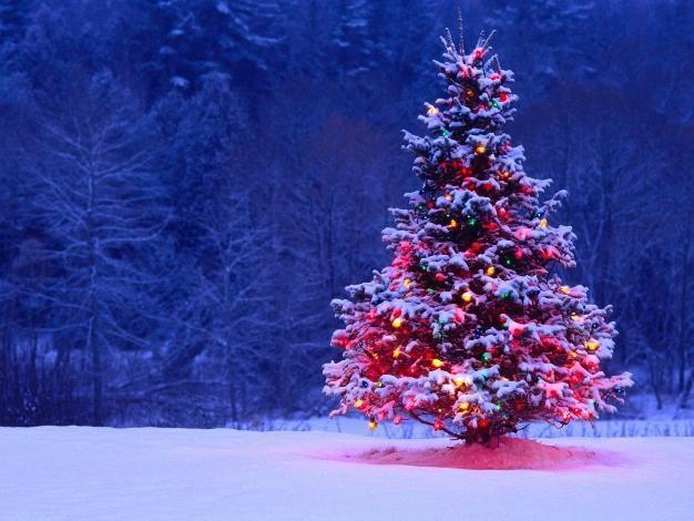 Уехать за границу на Новый год планируют менее 10 процентов жителей Волгограда