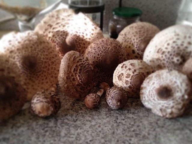 77 волгоградцев отравились грибами