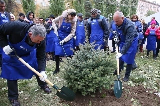 Вцентре Волгограда деловые люди и народные избранники лично высадили 60 елей
