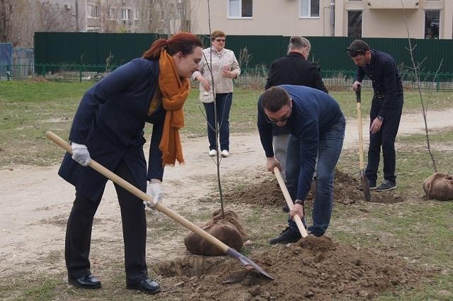 Деревья вместо свалки: на улице Пархоменко появились первые саженцы