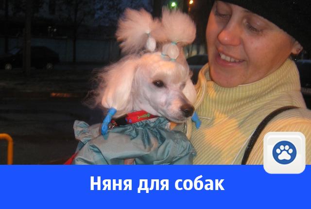 Услуги няни для собак в Волгограде