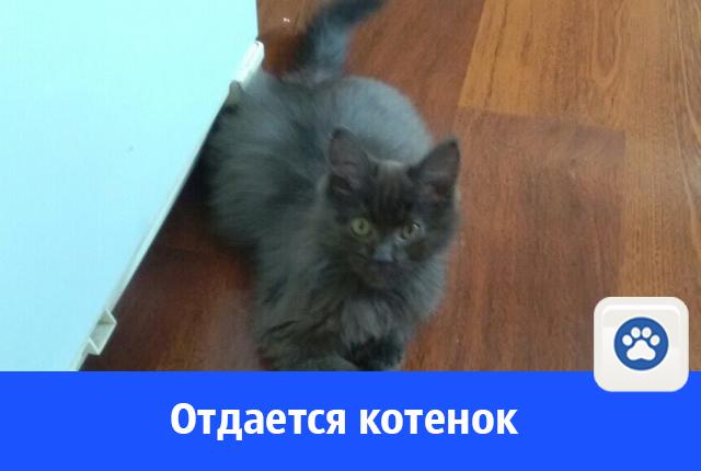 В добрые руки отдается красивый котенок