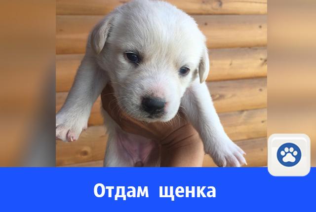 Кому собаку?