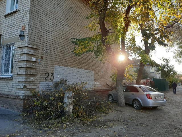 Волгоградцев забаррикадировали в собственном дворе спиленными ветками