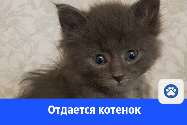 Кому очаровательного котенка?