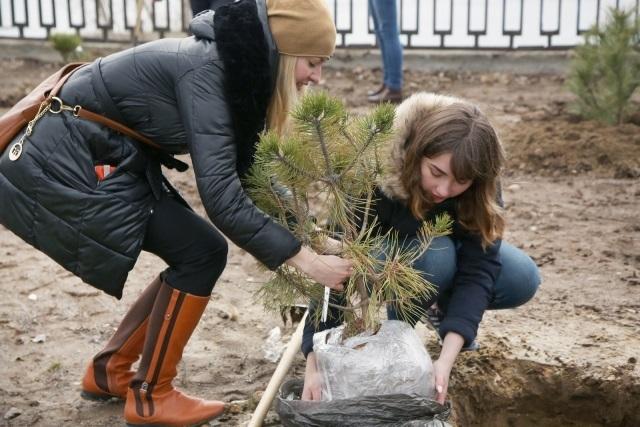 Сад из крымских сосен высадили на набережной Волгограда