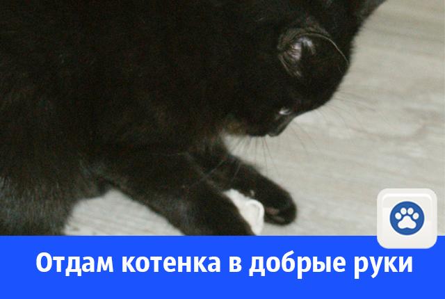 Ласковый котенок в добрые руки