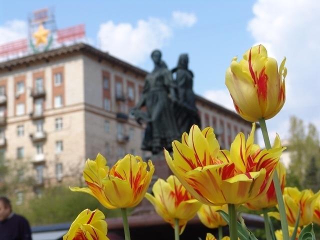 Больше 100 тысяч цветов высадят в Волгограде