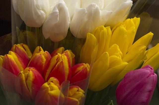 Масштабная выставка цветов будет организована для волгоградцев