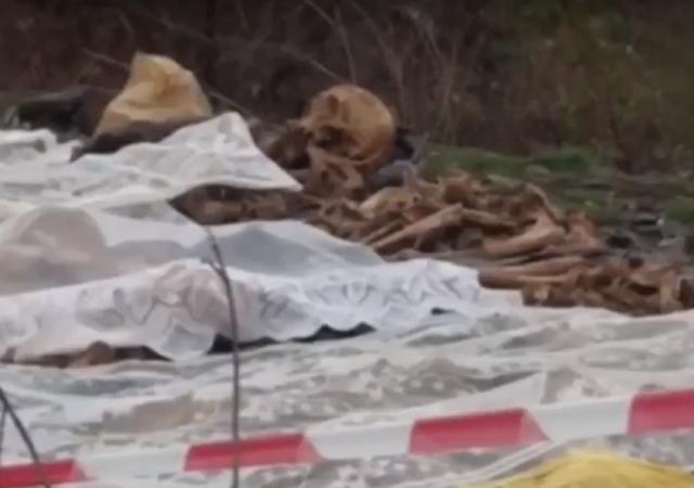 ВТракторозаводском районе подняли останки 40 героев войны