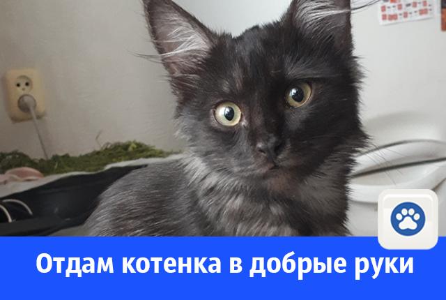 Найден котенок, кому комочек счастья?