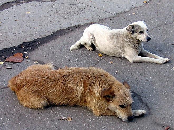 В Волгограде больше не будут отстреливать бродячих собак