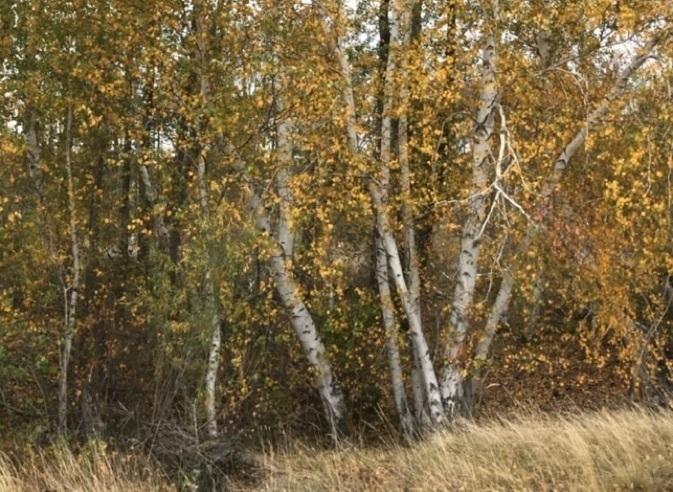 Семейная пара грибников заблудилась в лесу в Волгоградской области