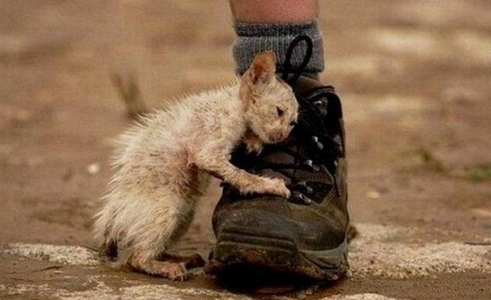 Волжанка умоляет мэрию не уничтожать бездомных животных